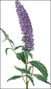 "free cross-stitch parren""hyacinth"""