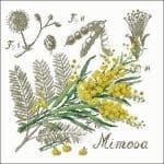 free cross-stitch pattern Mimosa