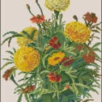 free cross stitch pattern marigold flowers